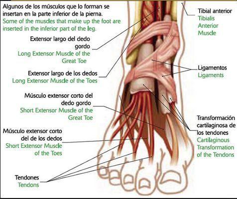 tendinitis en el dedo gordo del pie sintomas
