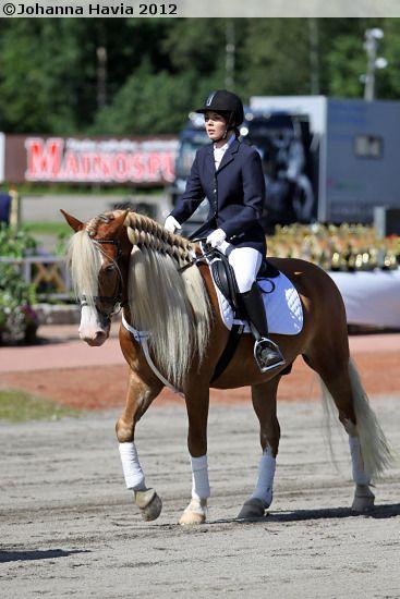 Finnhorse gelding RR-Rivaldo