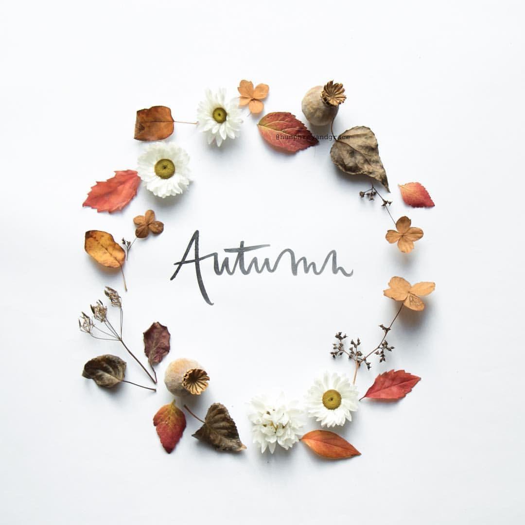 Consulta esta foto de Instagram de @humphreyandgrace • 5,143 Me gusta #autumnleavesfalling