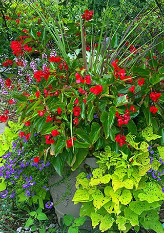 17 Best images about Flowers on Pinterest Gardens Container