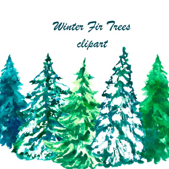 Watercolor Christmas Spruce Trees And Compositions Digital