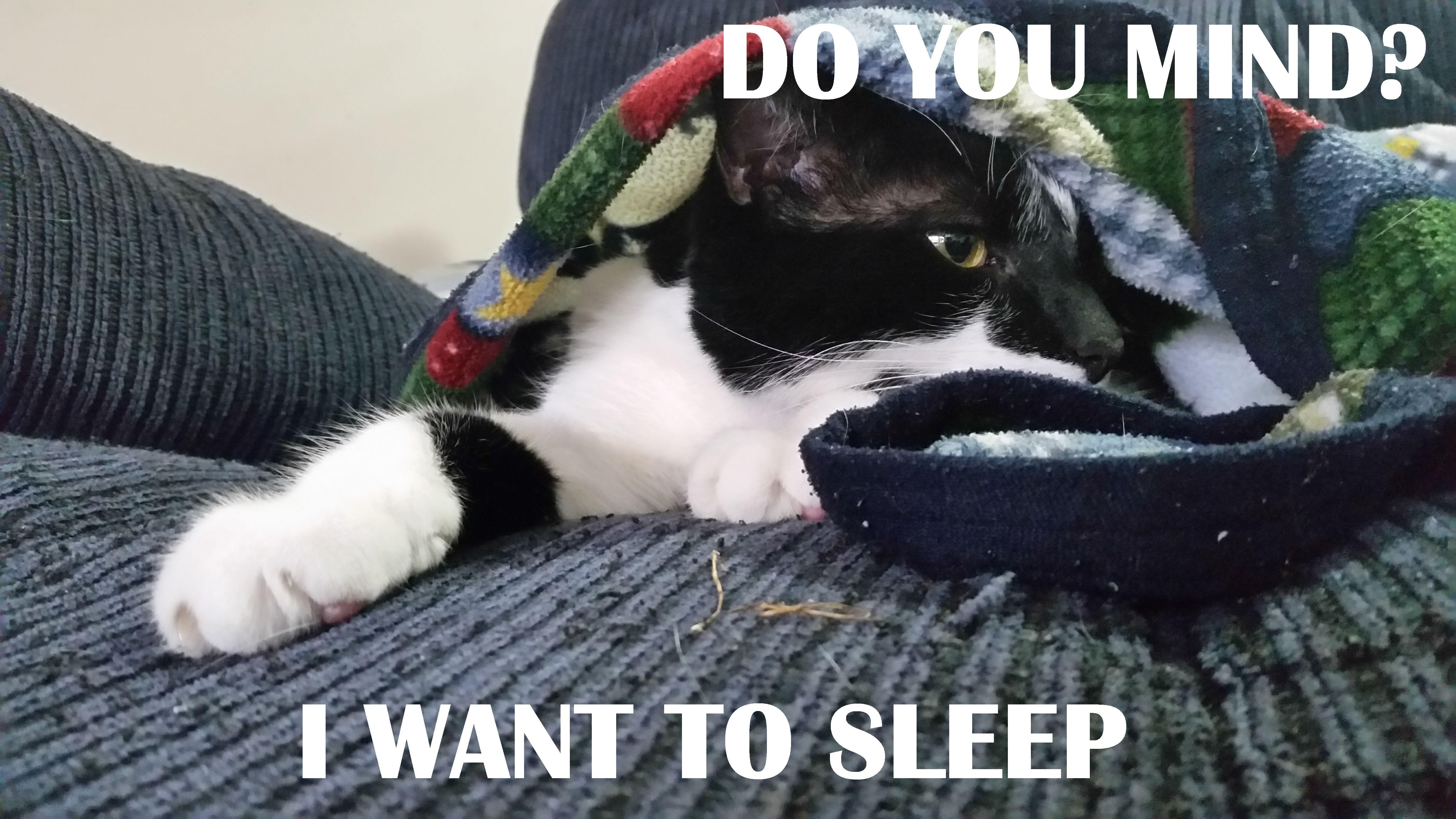 Algonquin The Cat Meme Bow Down Mortal - Algonquin The