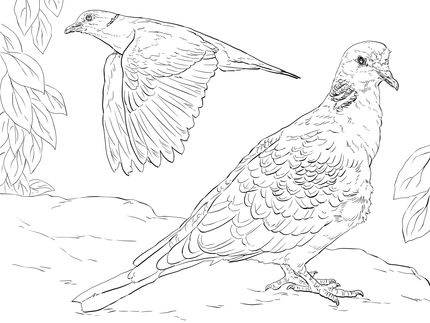 Click to see printable version of Turtle Doves coloring page | Birds ...