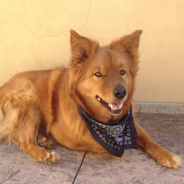 My Dog Chow Heeler Mix Heeler Mix Animal Quotes Dog Boarding