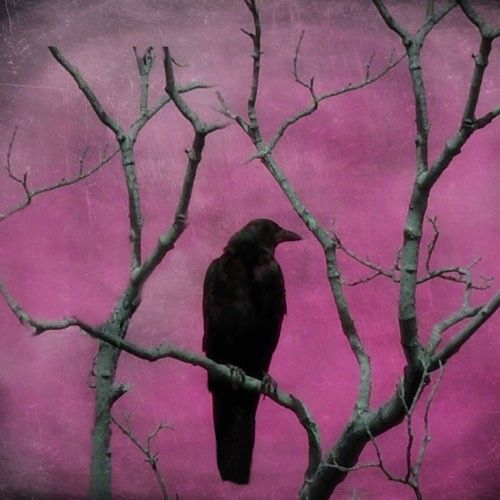 Nature Art fuchsia pink bird art print 10X8 Metallic by gothicrow