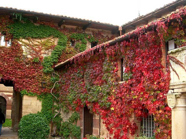 11 plantas trepadoras para adornar el interior o exterior for Jardineria exterior con guijarros