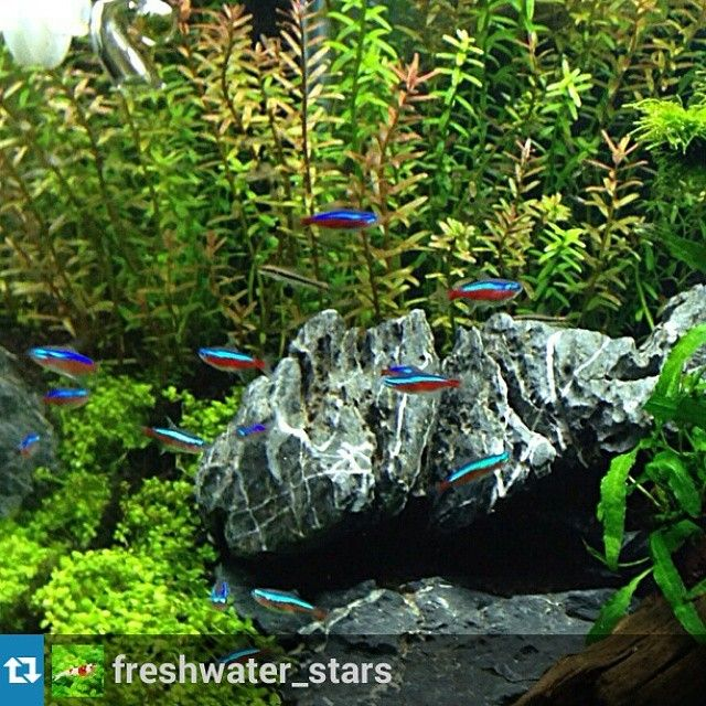 Follow Aquathusiast For Great Aquascape Features, News And Reviews!  #plantedtank #aquascape #