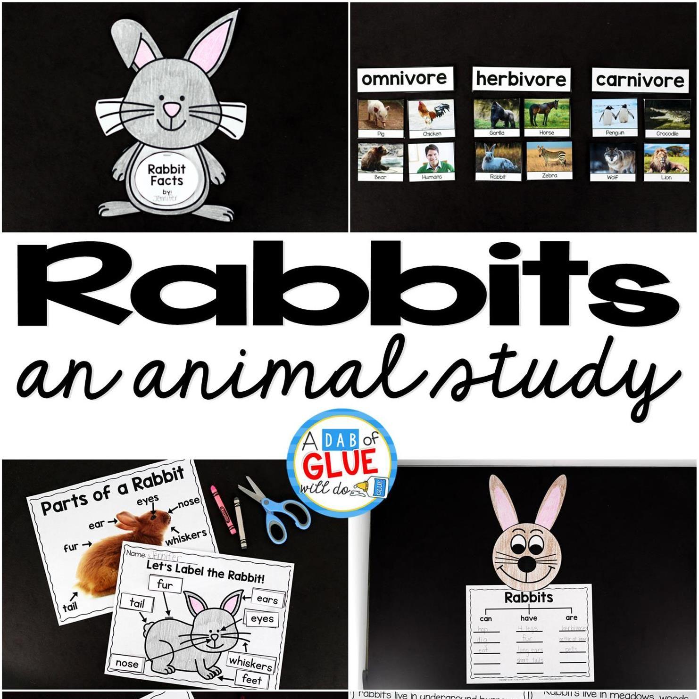 Rabbit Facts An Animal Study