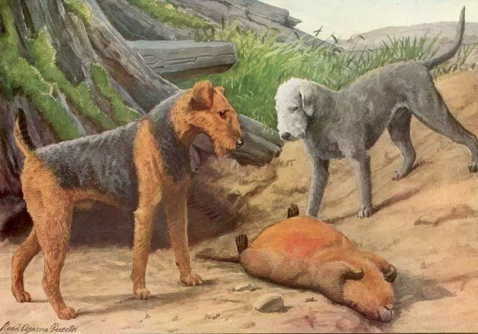Znalezione obrazy dla zapytania rothbury terrier airedale terrier