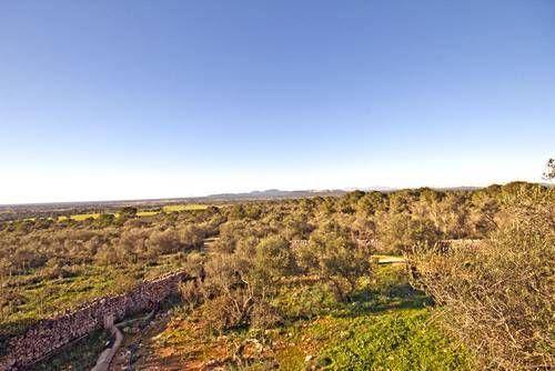 Mallorca Grundstücke zu verkaufen Immobilien mallorca