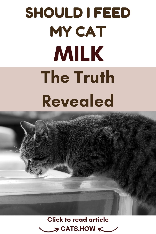 Should I Feed My Cat Milk Cat Drinking Cats Cat Advice