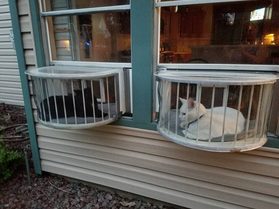 July New Customers Kitchen Organization Cat Window Cats Outside Cat Enclosure