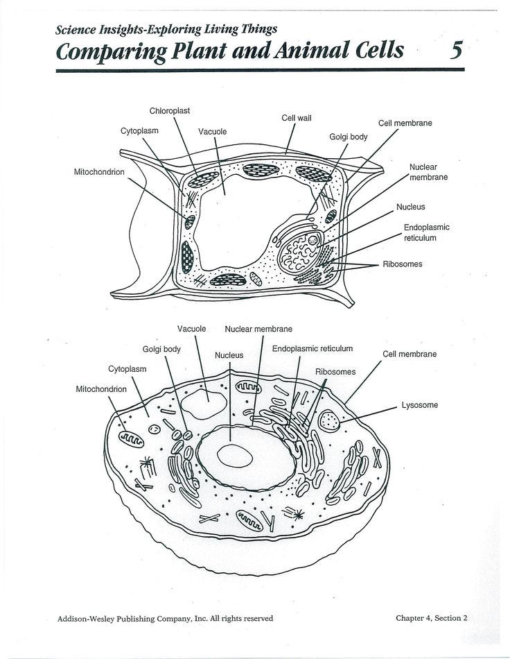 5th Grade Plant Cell Diagram Inspirational 9 Best Cell ...