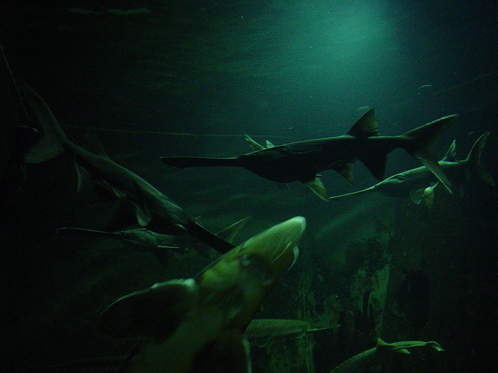 Local species aquarium Natural Science Museum Jackson Ms