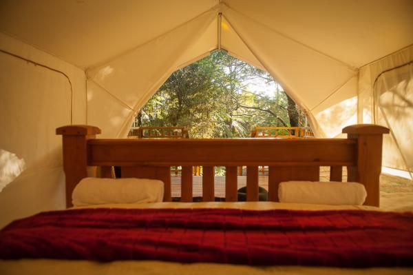 Highfield Forest Retreat Kauri Coast Canopy Camping In 2019 House Canopy Canopy Design Canopy Bedroom