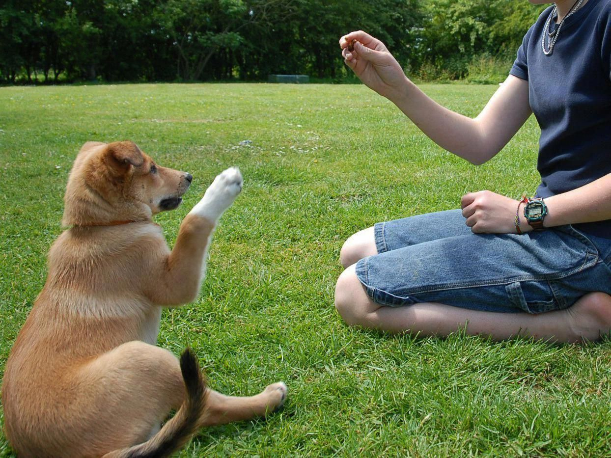 Eloquent underwrote cool dog training go to my blog (With