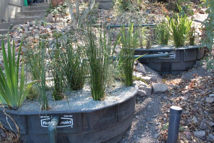 Reed Bed Grey Water Treatment System Environment Sustainability