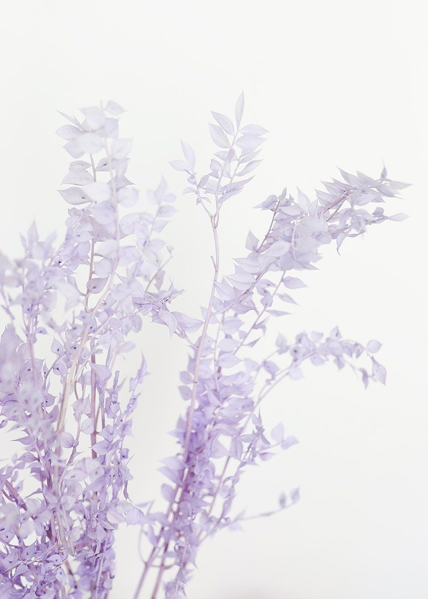 Preserved Ruscus Leaves In Lavender In 2020 Photo Wall Collage Lavender Aesthetic Light Purple Wallpaper