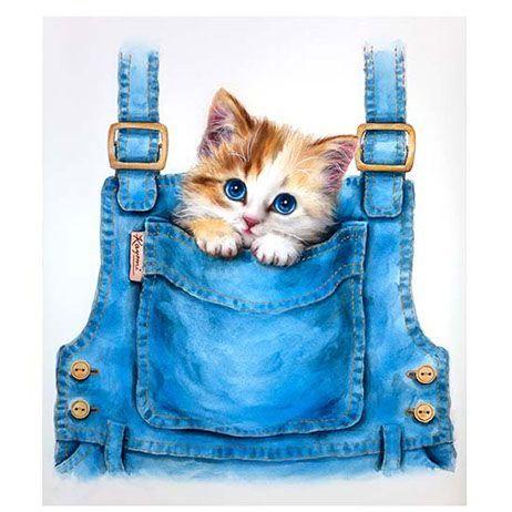 Pin by monique van beemen on pinterest dieren | Pinterest | Cat ...