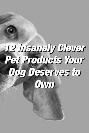 Vanessa Churchill Tells About 12 Insanely Clever Pet Products Your Dog Deserves to Own #dogs#catsanddogs#doglovers#dogspuppys#dogcat#doghealth#petideas#animatedpets#doglife