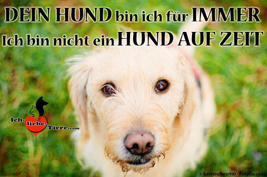 Dein Hund Bin Ich Fur Immer Ich Bin Kein Hund Auf Zeit Http Www Ich Liebe Tiere Com Hunde Tiere Gluckliche Hunde