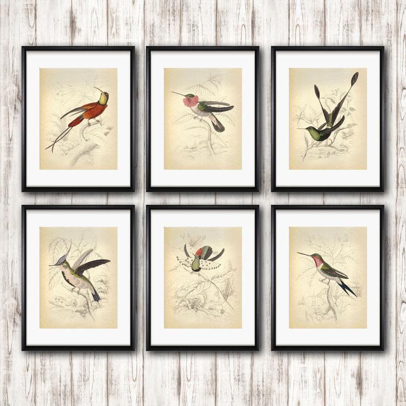 bird print c anna/'s hummingbird /& rufous hummingbird color lithograph 1934 HUMMINGBIRD PRINT original vintage print ornithology