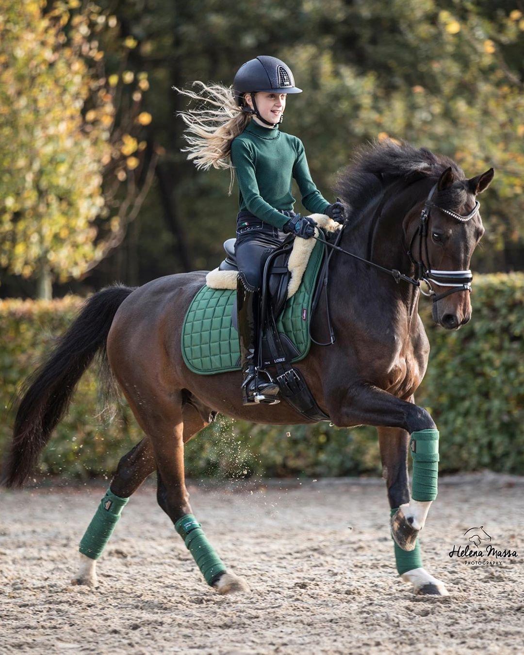 Pin Von L A U R A Auf C U T E H O R S E S In 2020 Pferde Fotografie Pferde Pferdefotografie