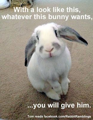 Rabbit Ramblings Funny Bunny Memes Cute Bunnies Funny Bunnies