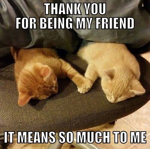 Image result for thank you for being a friend cat images