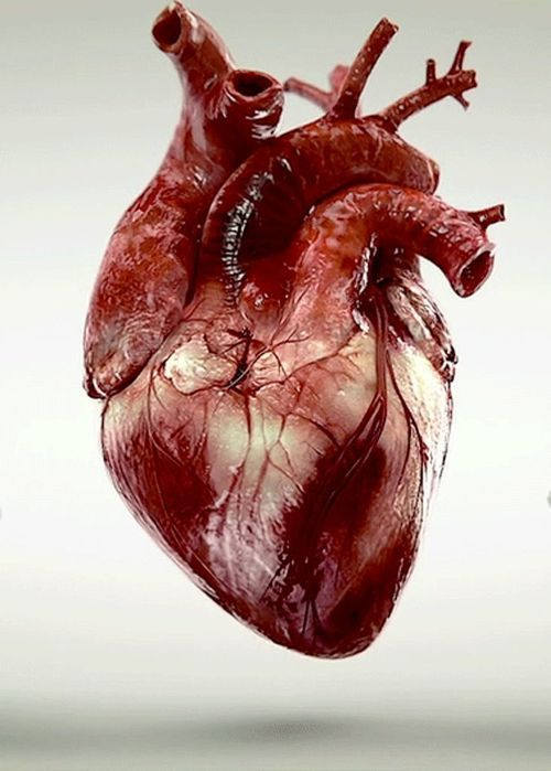 The human heart is truly a thing of beauty! I am obsessed with ...