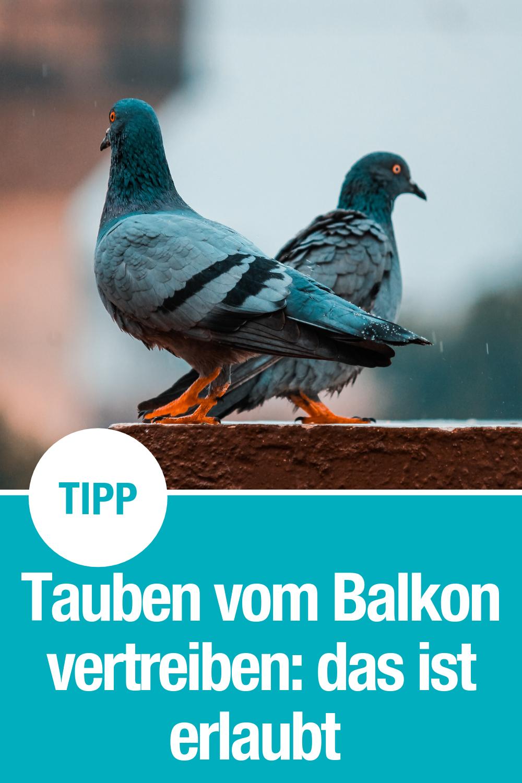 Tipps Vögel Vertreiben