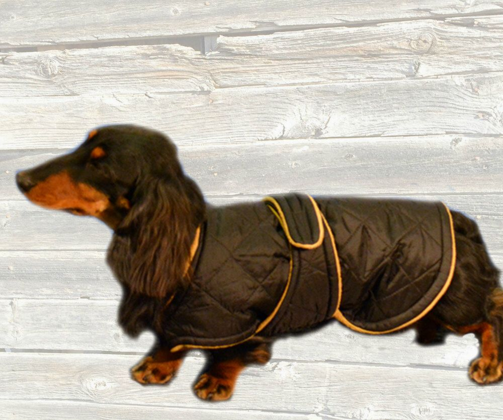 Winter Dog Coat, Custom made with quilted nylon and tummy panel by ... : quilted dog coats for winter - Adamdwight.com
