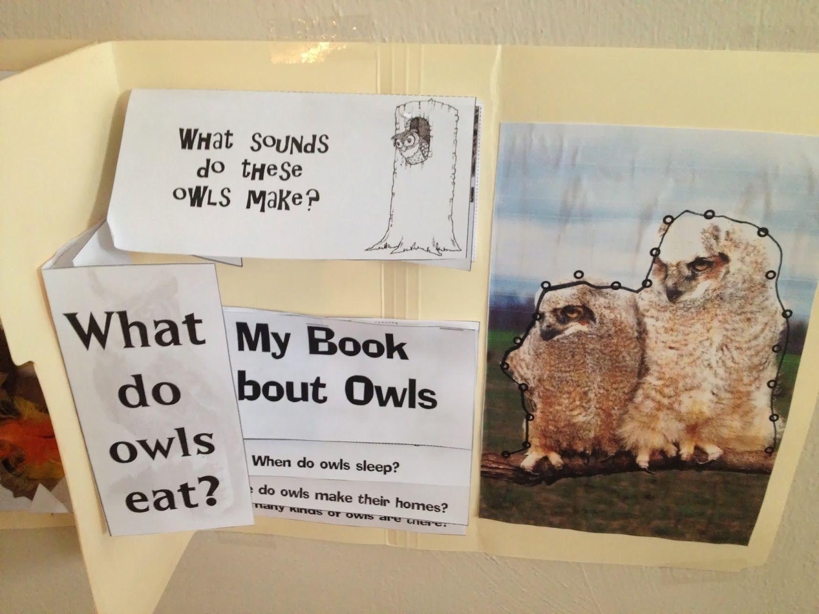 Coastal Breezes Academy Five In A Row Owl Moon