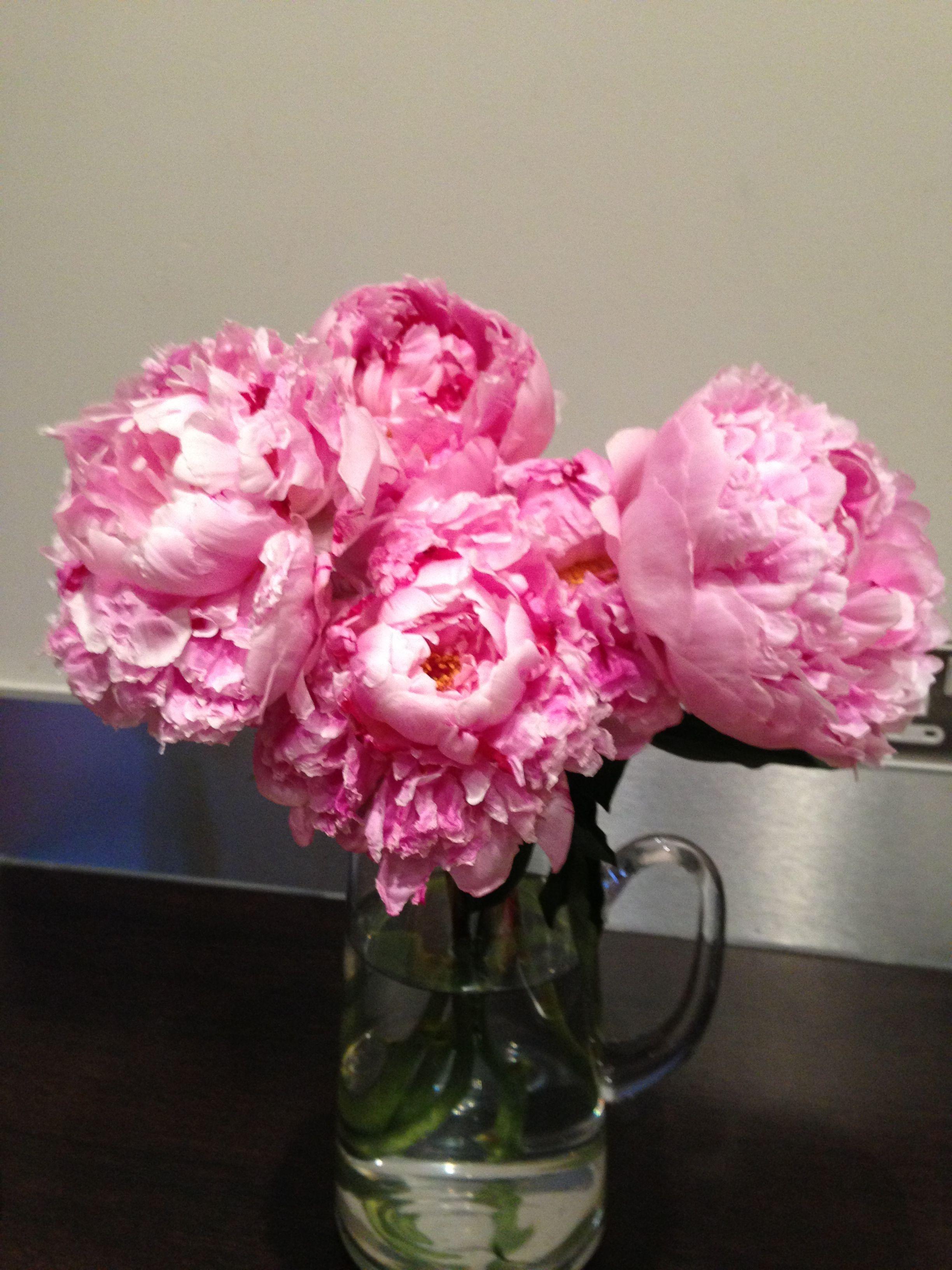 My current fave flower les fleures pinterest