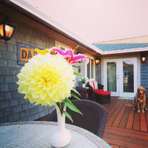 My patio with the pup. #goldenretriever #patio #deck #house #wood #dog #nice by priceypads - http://sfluxe.com/2013/07/26/my-patio-with-the-pup-goldenretriever-patio-deck-house-wood-dog-nice-by-priceypads/