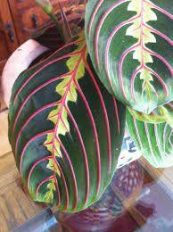 Resultado de imagem para pink and green leaves