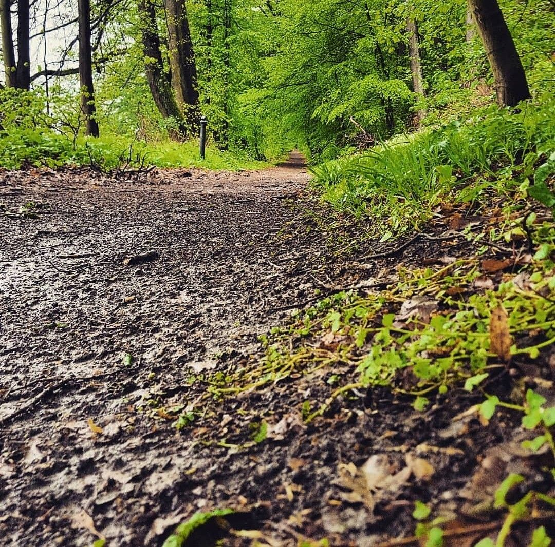Waldspaziergang Landschaftsfotografie Waldspaziergang Sachsenwald