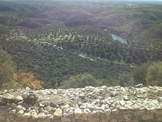 Gantiardi S.L.: Los árboles y el equilibrio ecológico