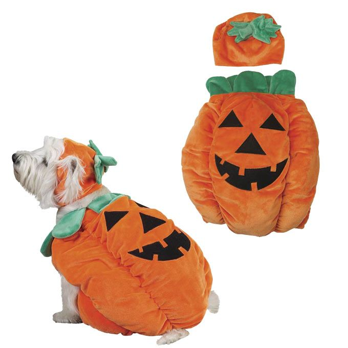 Zack & Zoey® Pumpkin Pooch Dog Costume at The Animal Rescue Site