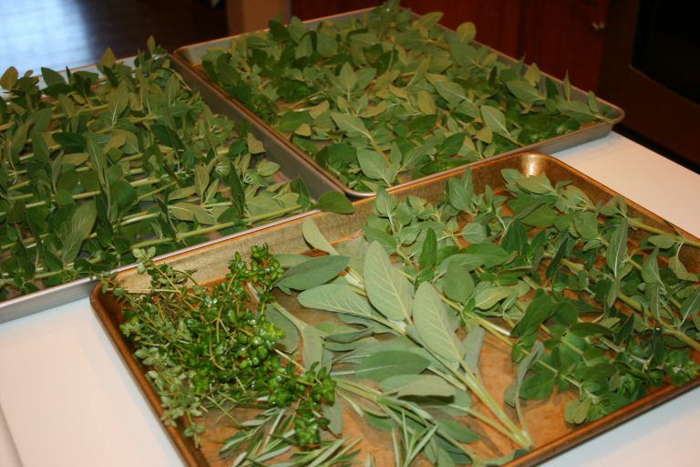 How to Dry Herbs in your Oven