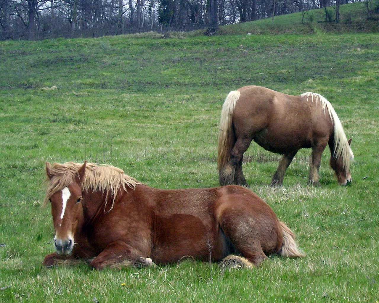 Horses   Horses, wallpapers, papers, images - 93848
