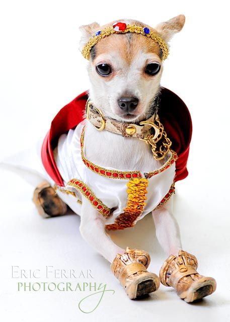 Dog Greek God Costume By Roberto Negrin Best Dog Costumes Diva