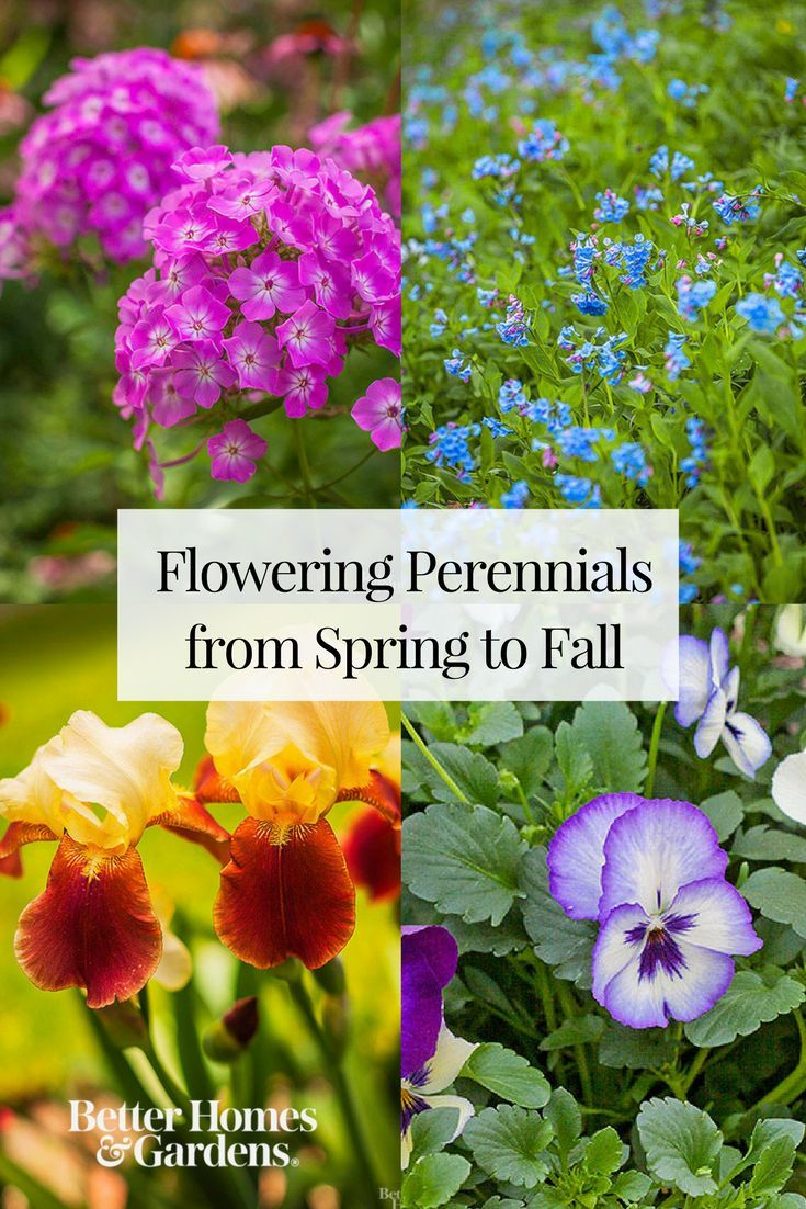 Perennial Flowers That Bloom All Summer Perennials Gardens And Spring