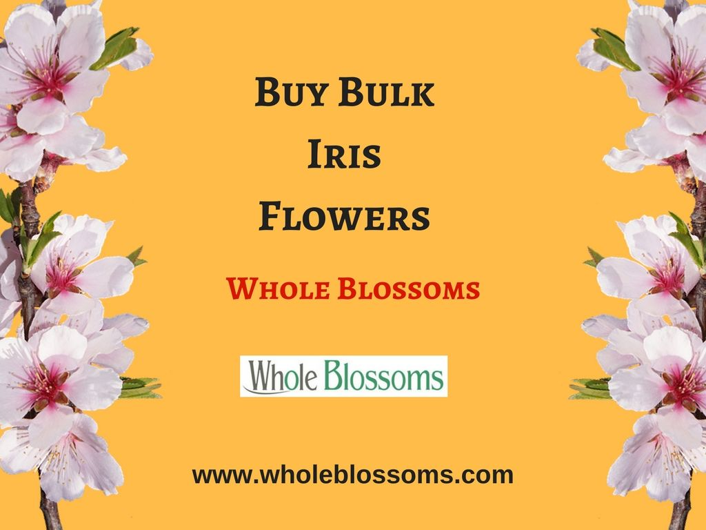 If you want to buy iris flowers in bulk then order them from whole if you want to buy iris flowers in bulk then order them from whole blossoms izmirmasajfo