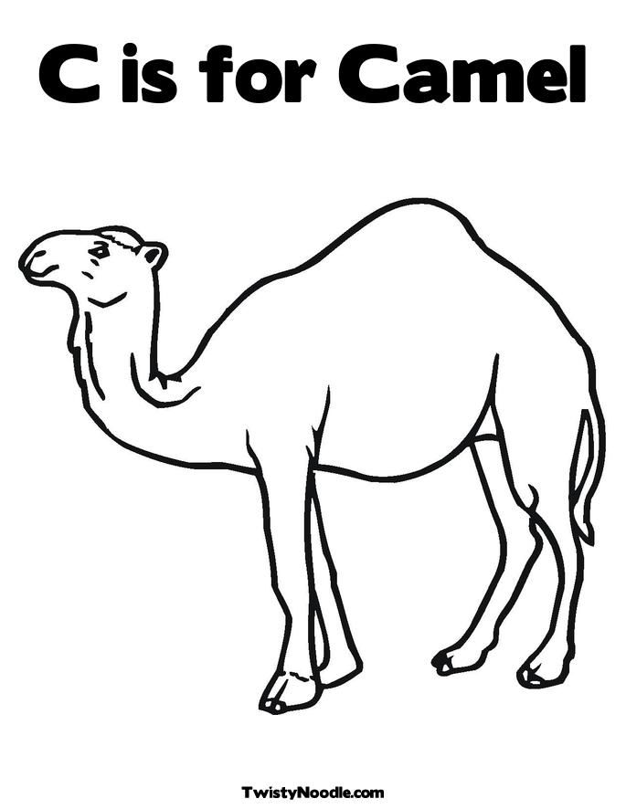 Pin On Camels My Favorite Animal