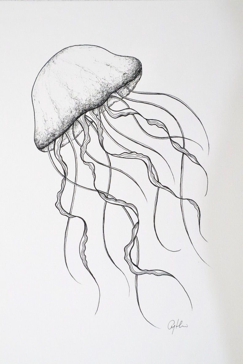 jellyfish Drawing, sea life illustration, nursery wall decoration, coastal beach decor, nautical decor, ocean artwork, beach style decor
