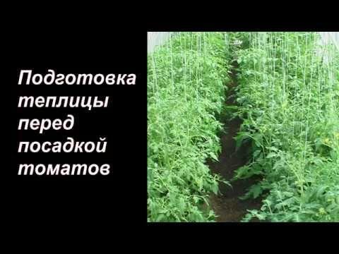 подготовка почвы для рассады томатов в теплице
