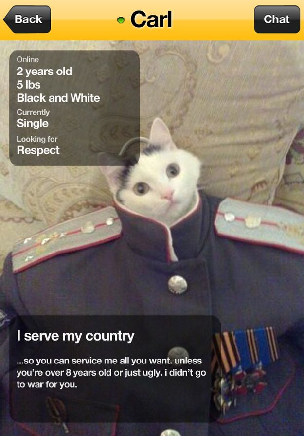 The military cat.