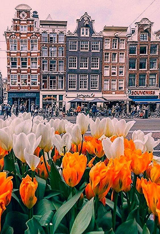 Photo of Top 8 ideas for photos in Amsterdam