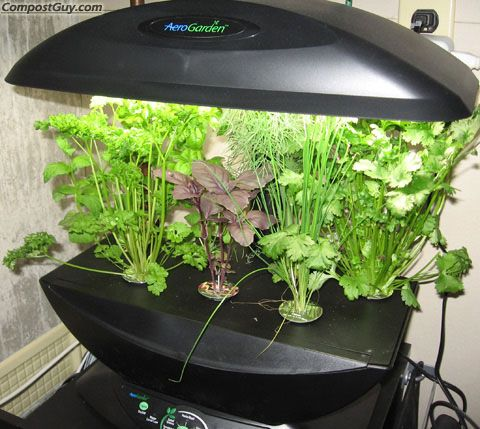 Aerogarden At Walmart | The Worst Kitchen Gifts For Mom On Mothers Day    Dallas